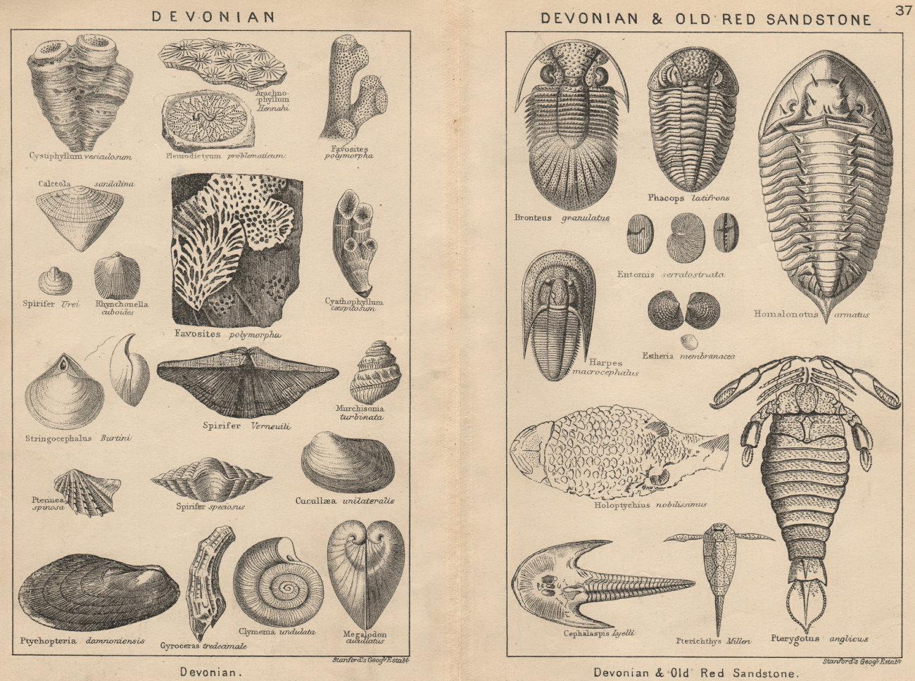 Associate Product BRITISH FOSSILS. Devonian. Devonian & Old Red Sandstone. STANFORD 1913 print