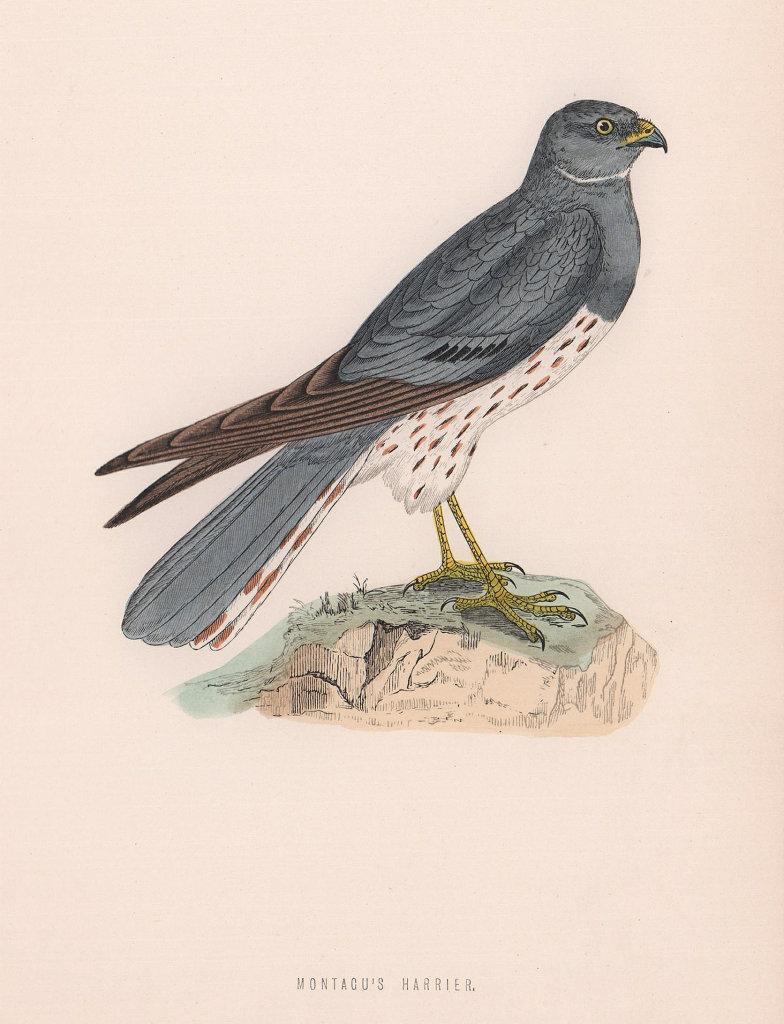 Montagu's Harrier. Morris's British Birds. Antique colour print 1870 old