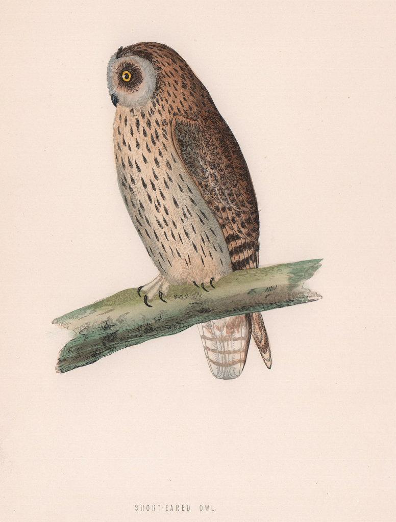 Short-eared Owl. Morris's British Birds. Antique colour print 1870 old