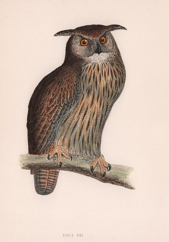 Eagle Owl. Morris's British Birds. Antique colour print 1870 old