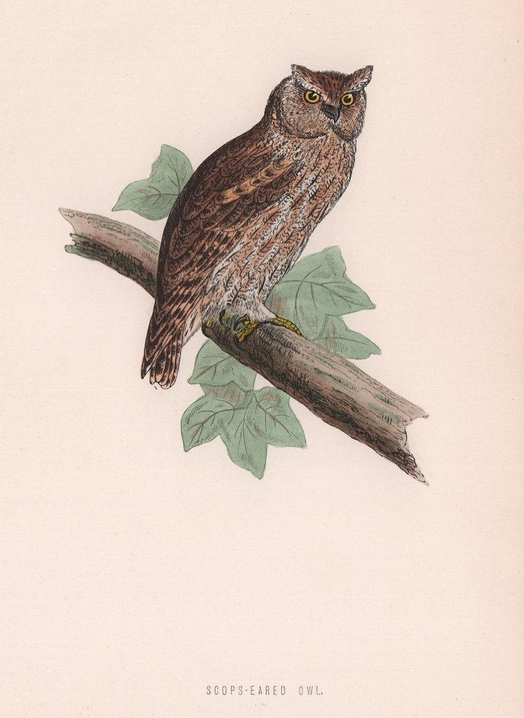 Scops-eared Owl. Morris's British Birds. Antique colour print 1870 old