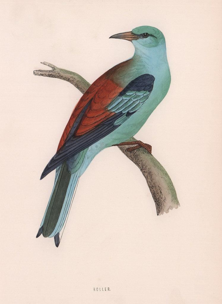 Roller. Morris's British Birds. Antique colour print 1870 old