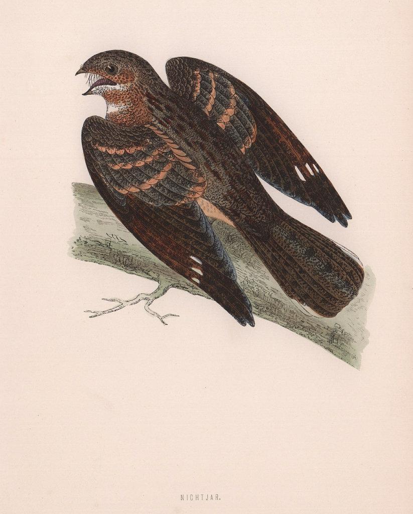 Nightjar. Morris's British Birds. Antique colour print 1870 old