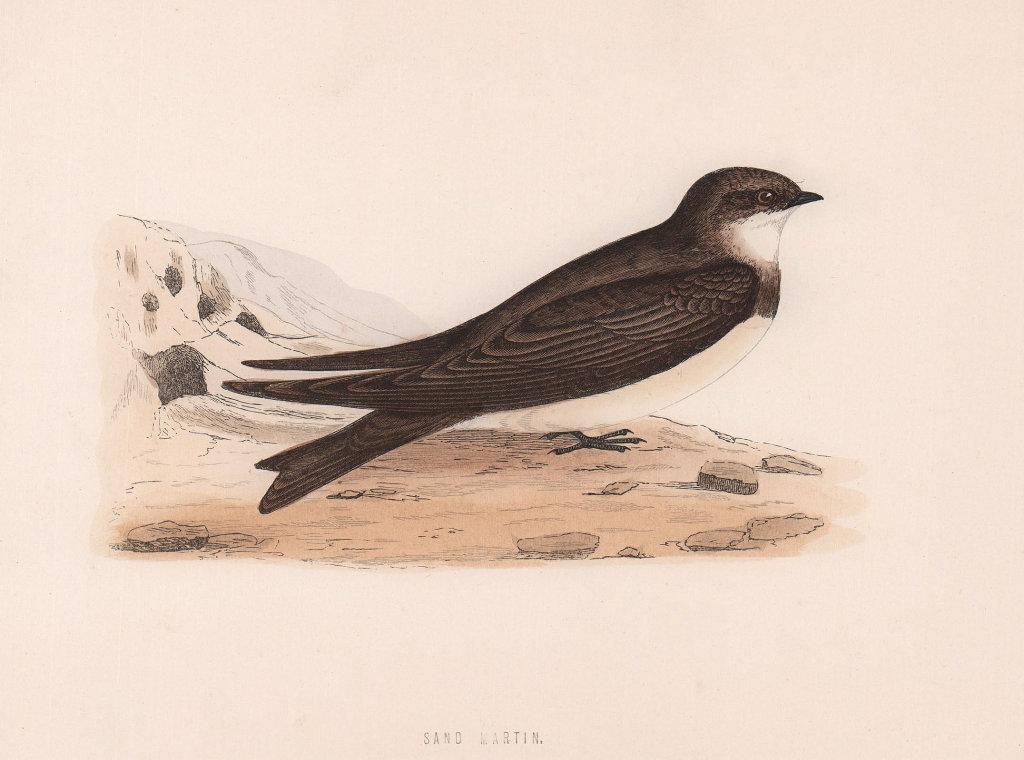 Sand Martin. Morris's British Birds. Antique colour print 1870 old