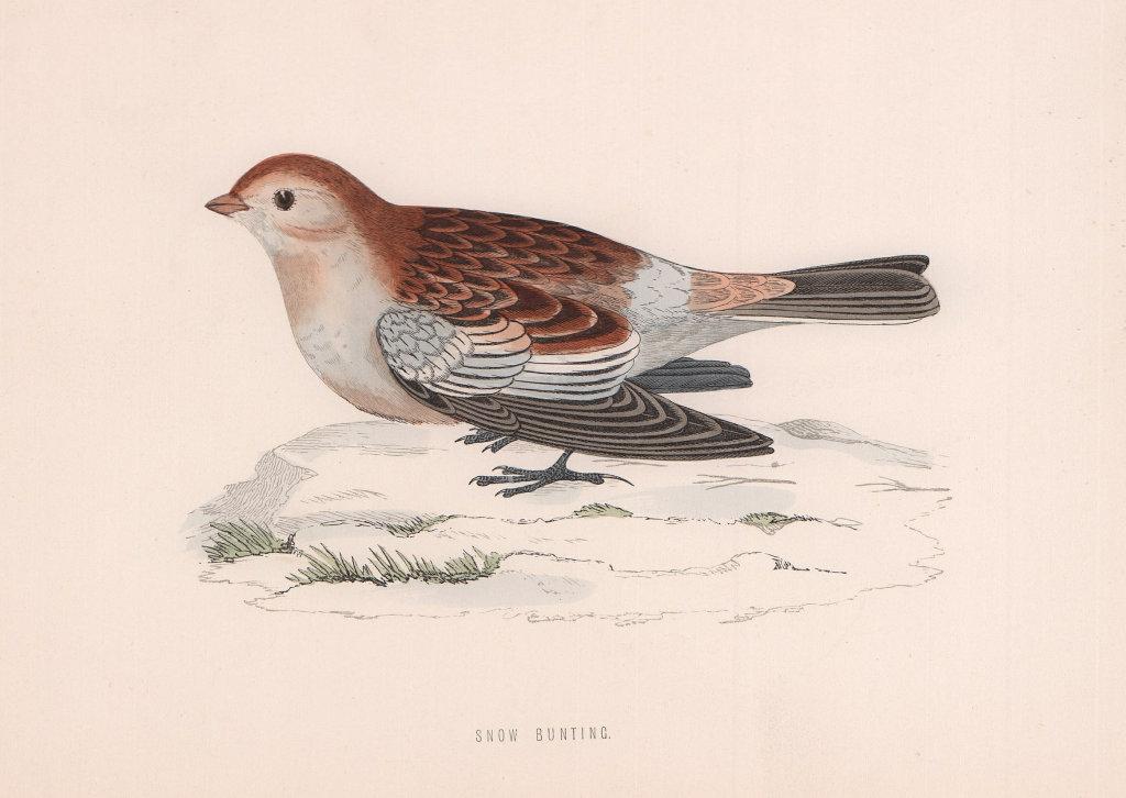 Snow Bunting. Morris's British Birds. Antique colour print 1870 old