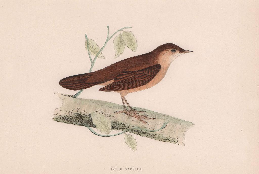 Savi's Warbler. Morris's British Birds. Antique colour print 1870 old