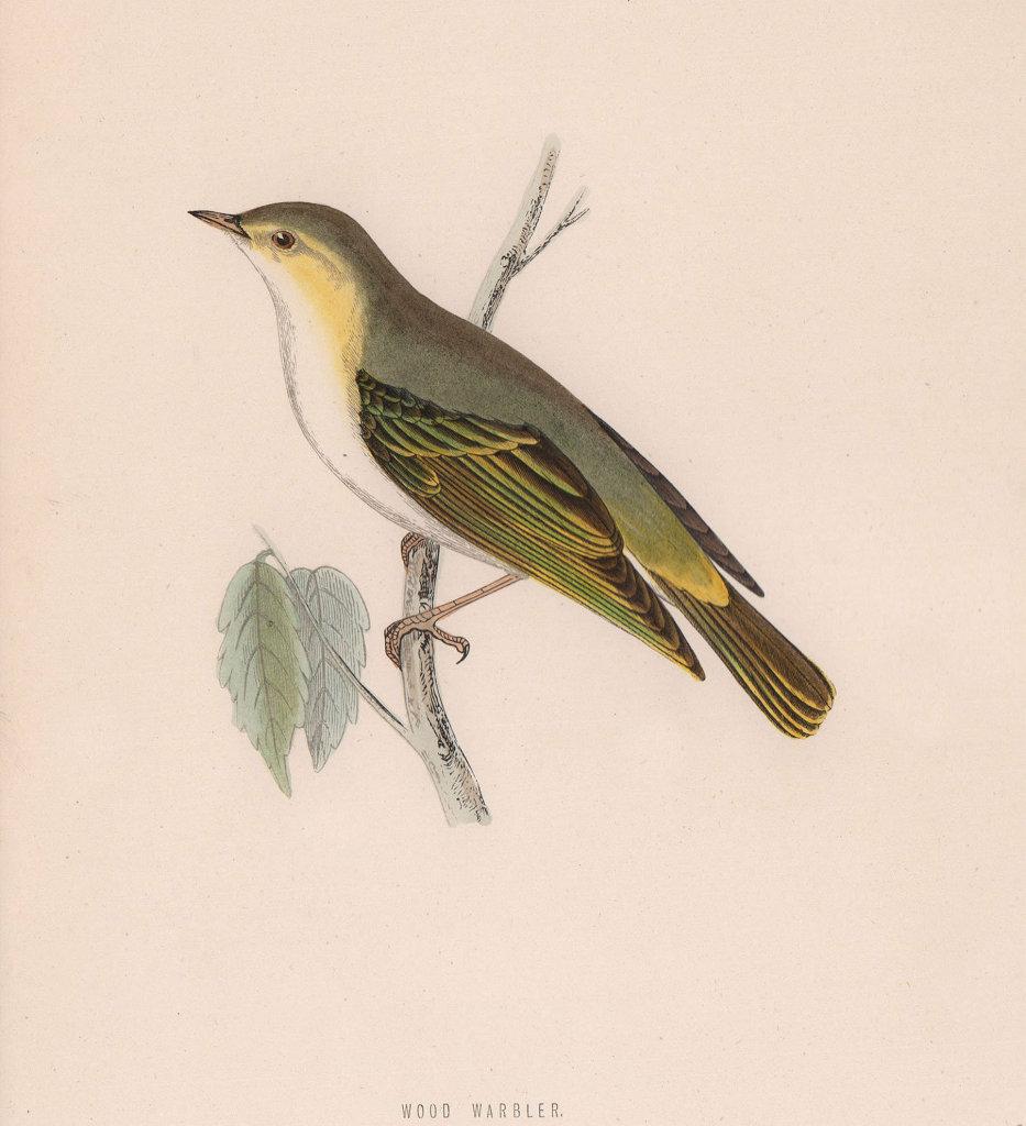 Wood Warbler. Morris's British Birds. Antique colour print 1870 old