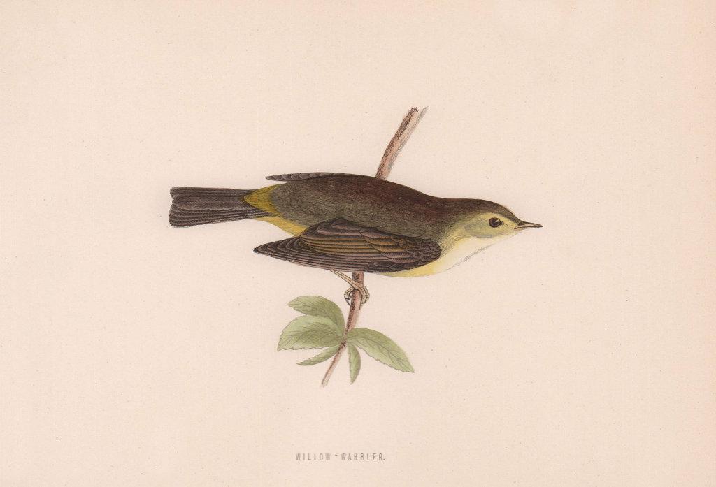 Willow Warbler. Morris's British Birds. Antique colour print 1870 old