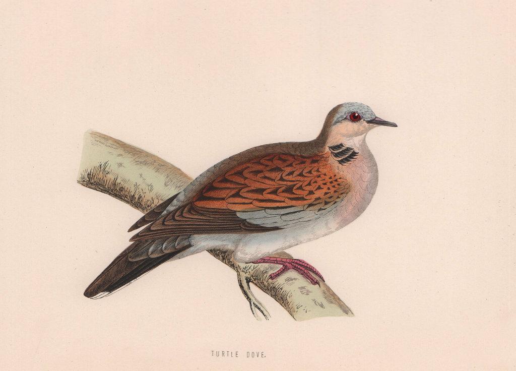 Turtle Dove. Morris's British Birds. Antique colour print 1870 old