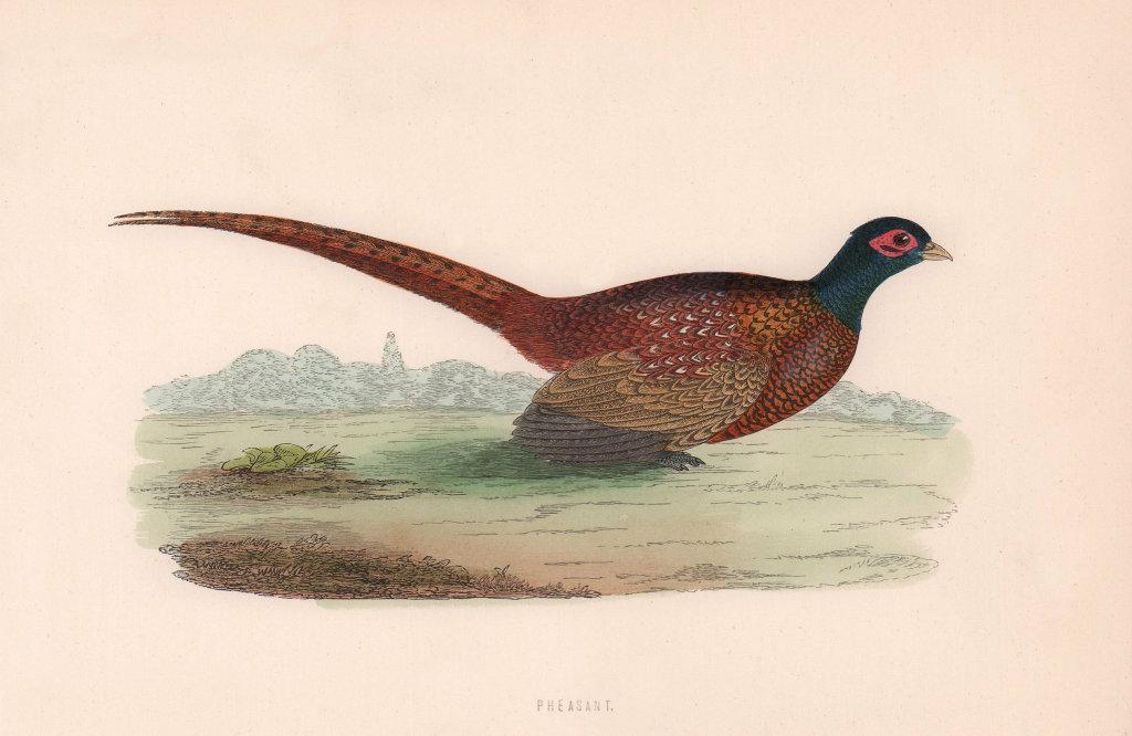 Pheasant. Morris's British Birds. Antique colour print 1870 old