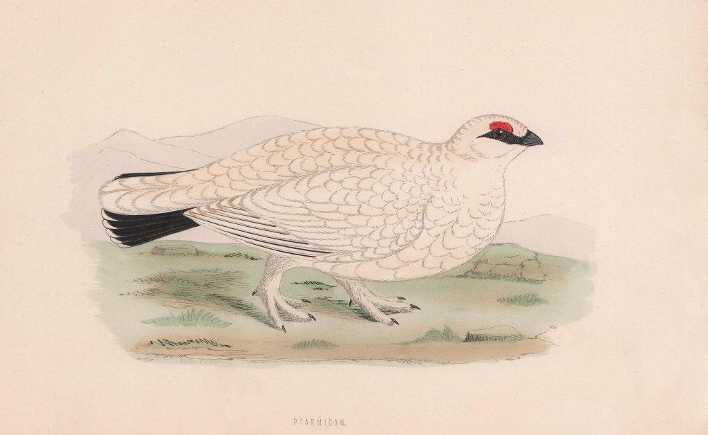Ptarmigan. Morris's British Birds. Antique colour print 1870 old