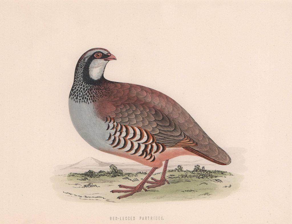 Red-Legged Partridge. Morris's British Birds. Antique colour print 1870