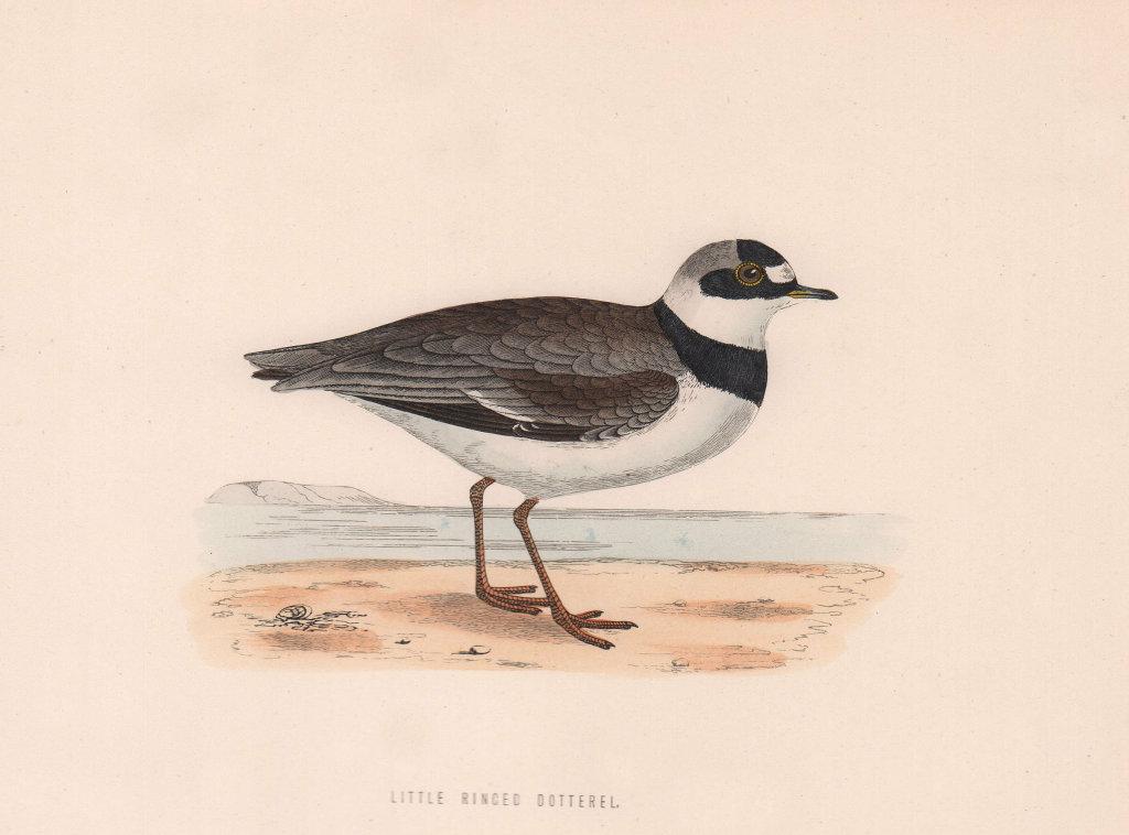 Little Ringed Dotterel. Morris's British Birds. Antique colour print 1870