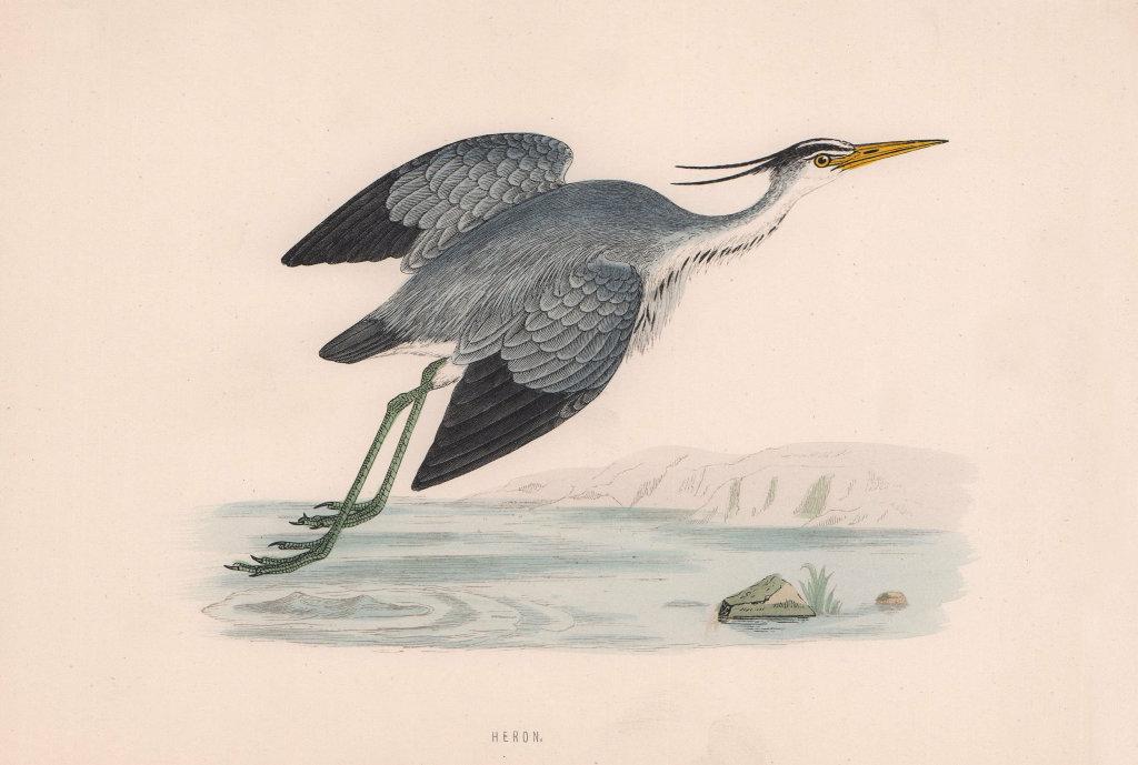 Heron. Morris's British Birds. Antique colour print 1870 old