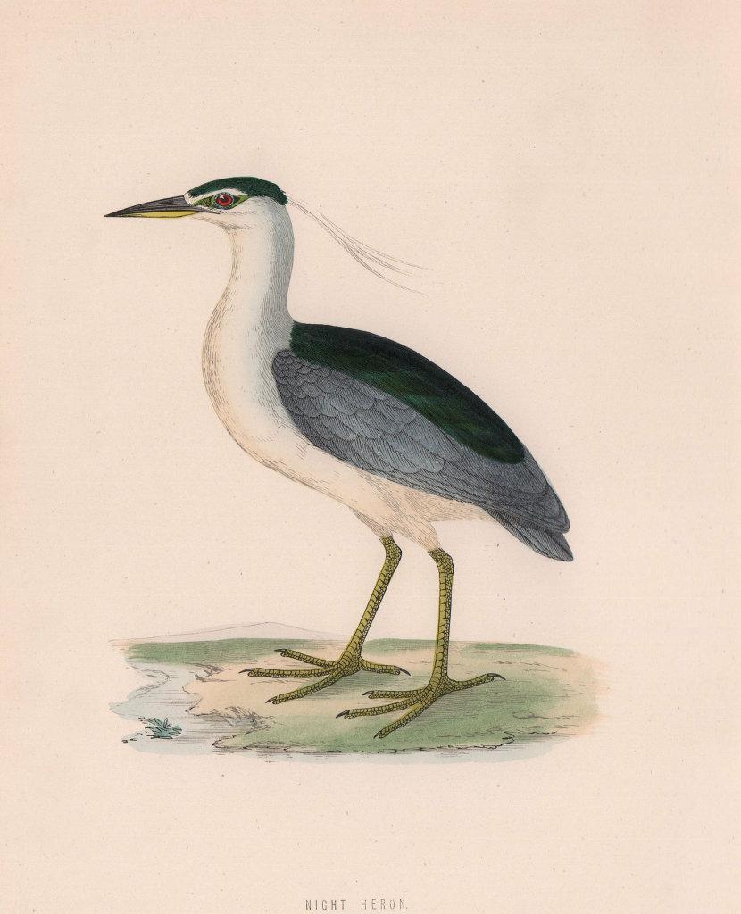 Night Heron. Morris's British Birds. Antique colour print 1870 old