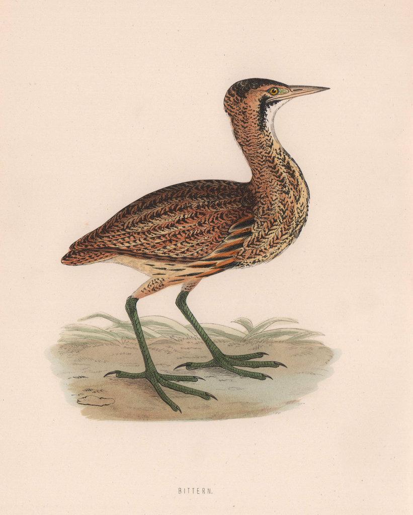 Bittern. Morris's British Birds. Antique colour print 1870 old