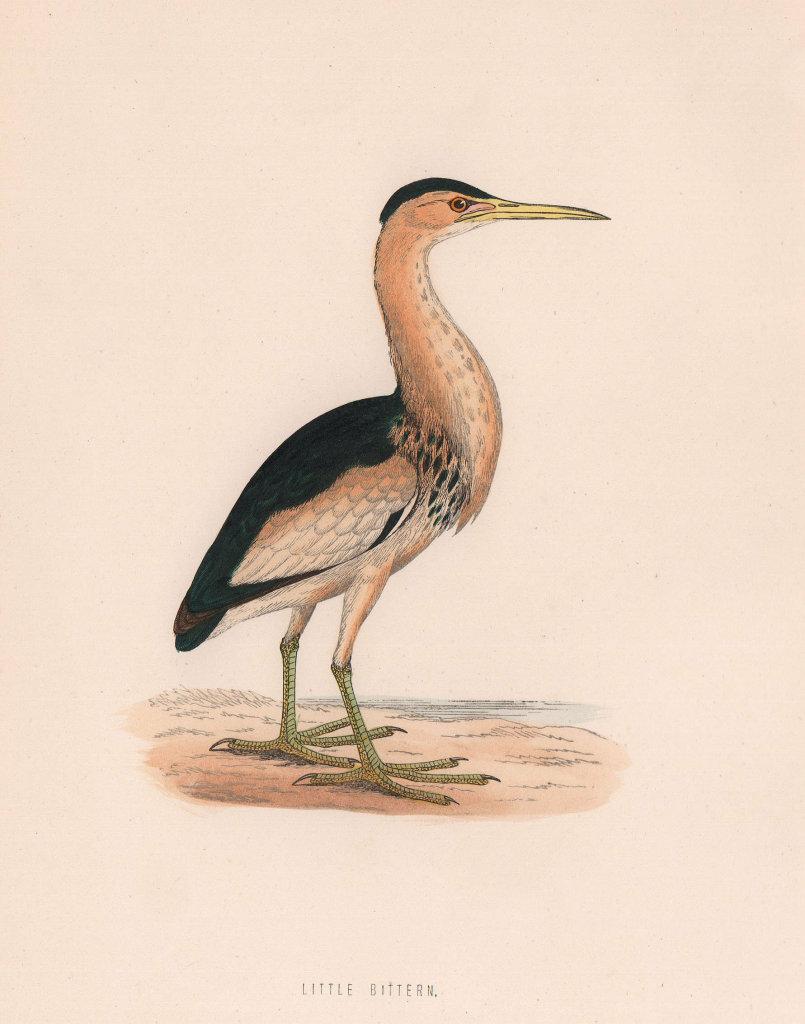 Little Bittern. Morris's British Birds. Antique colour print 1870 old