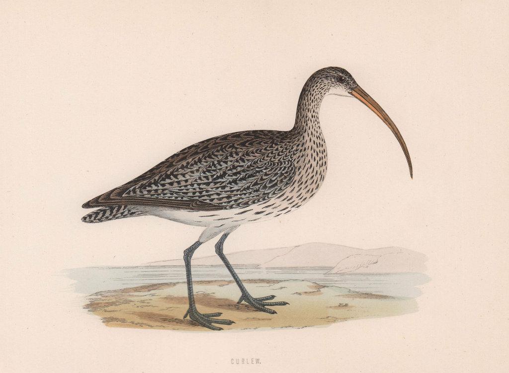 Curlew. Morris's British Birds. Antique colour print 1870 old