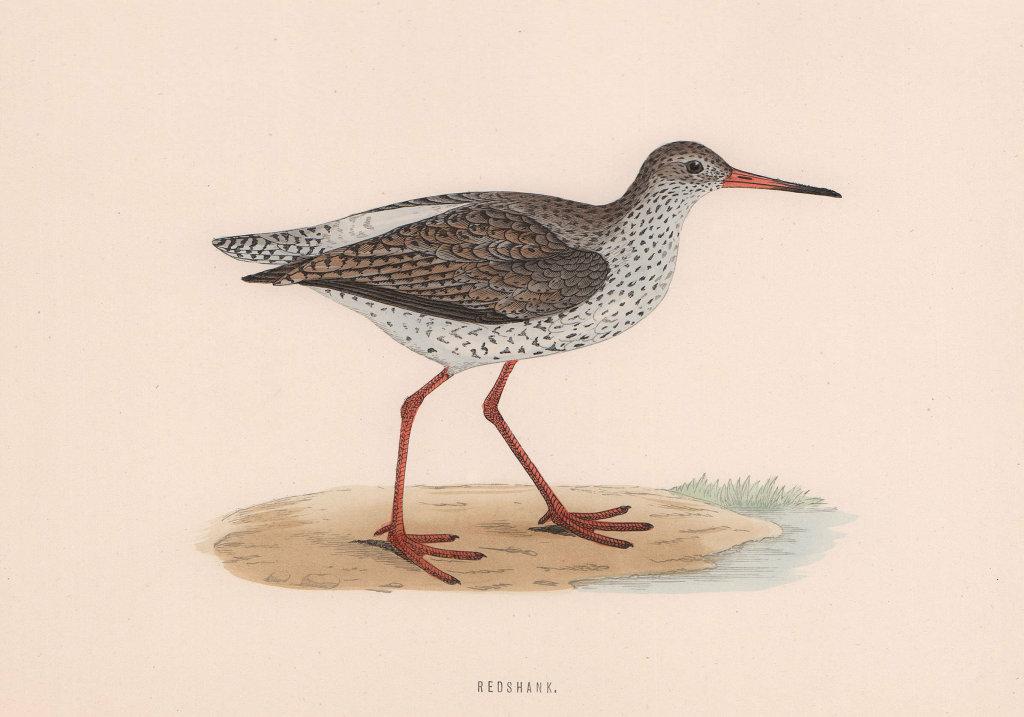 Redshank. Morris's British Birds. Antique colour print 1870 old