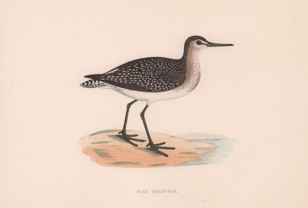 Wood Sandpiper. Morris's British Birds. Antique colour print 1870 old