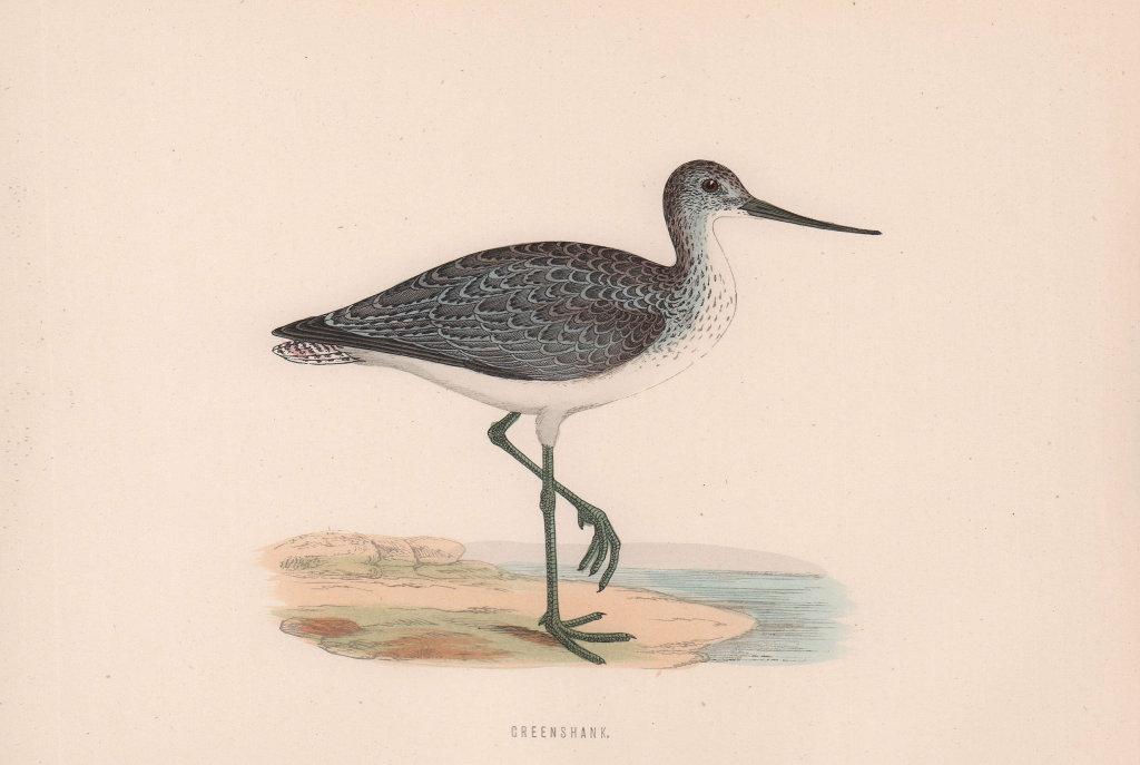 Greenshank. Morris's British Birds. Antique colour print 1870 old