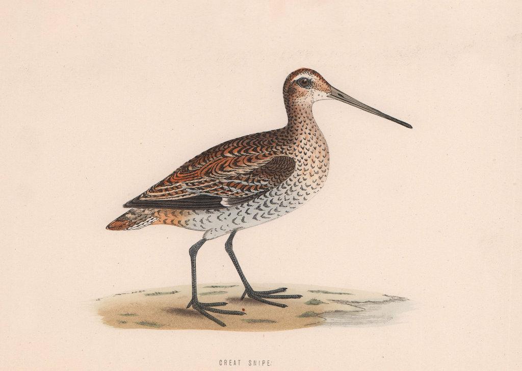 Great Snipe. Morris's British Birds. Antique colour print 1870 old