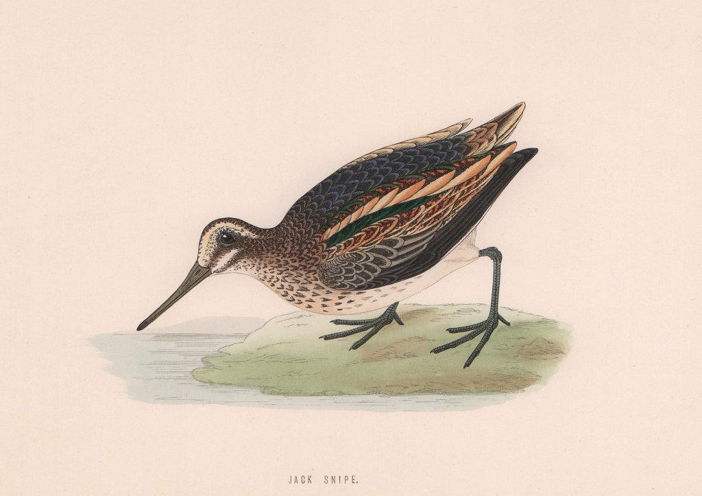 Jack Snipe. Morris's British Birds. Antique colour print 1870 old