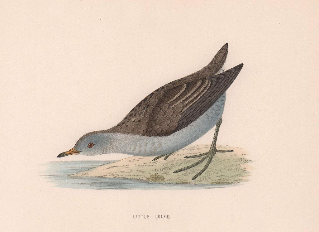 Little Crake. Morris's British Birds. Antique colour print 1870 old