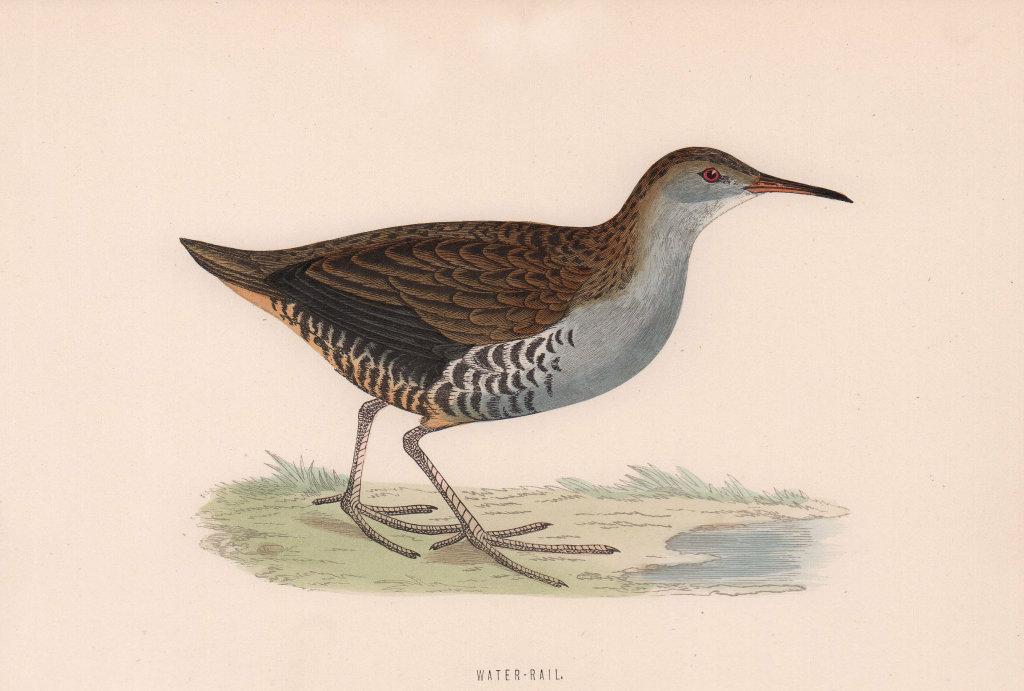 Water-Rail. Morris's British Birds. Antique colour print 1870 old