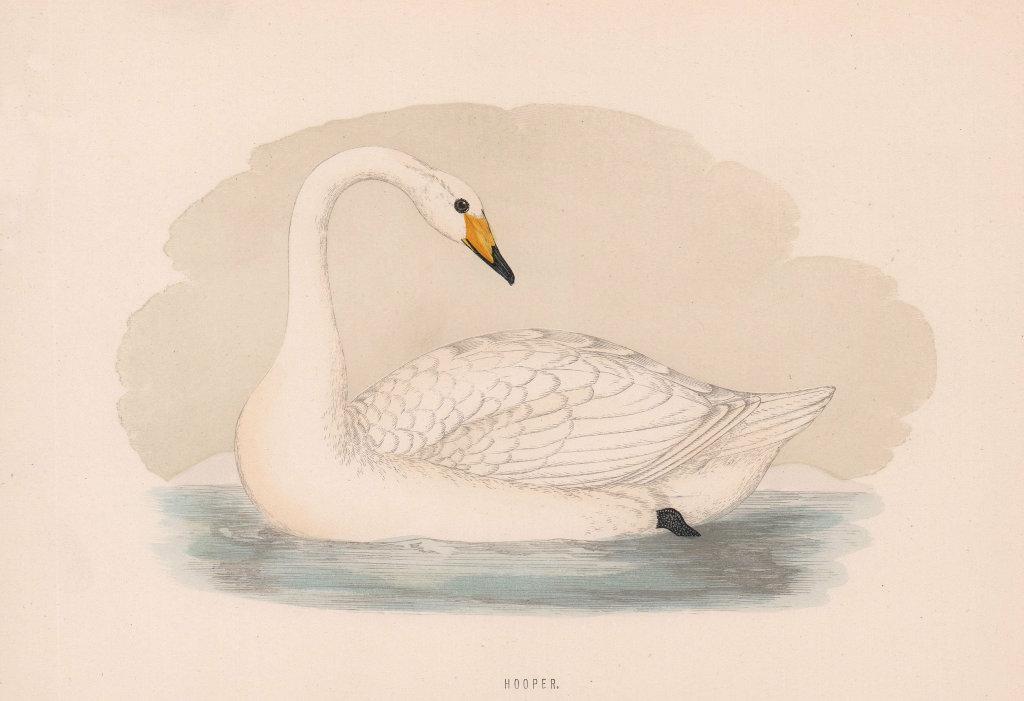 Hooper. Morris's British Birds. Antique colour print 1870 old
