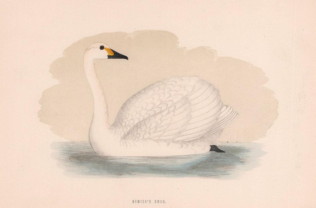 Bewick's Swan. Morris's British Birds. Antique colour print 1870 old