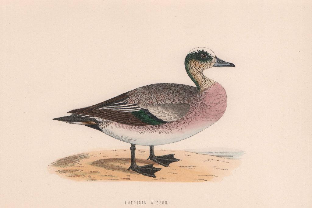 American Wigeon. Morris's British Birds. Antique colour print 1870 old