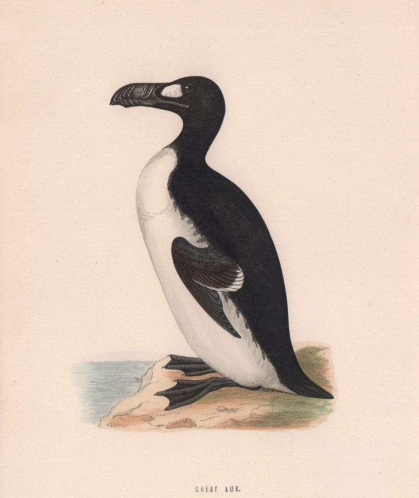Great Auk. Morris's British Birds. Antique colour print 1870 old