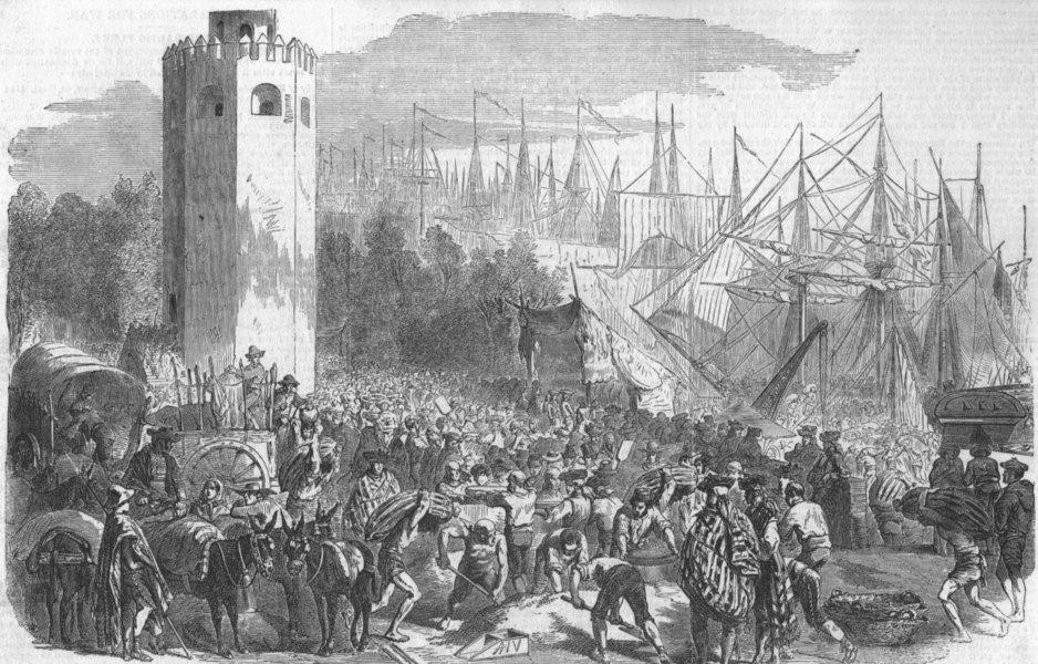 SEVILLE. Exportation of Corn. Spain, antique print, 1854