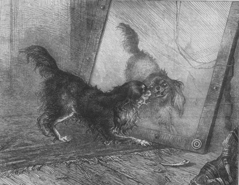Associate Product DOGS. Unpleasant reflections, by P Macquoid, antique print, 1872