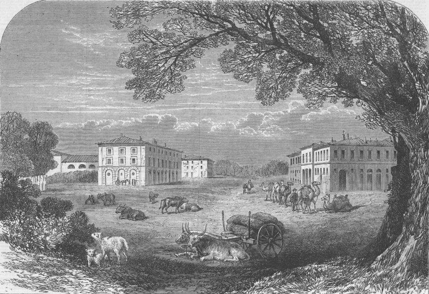 Associate Product ITALY. Il Gombo, nr Pisa, Farm of Victor Emmanuel, antique print, 1864