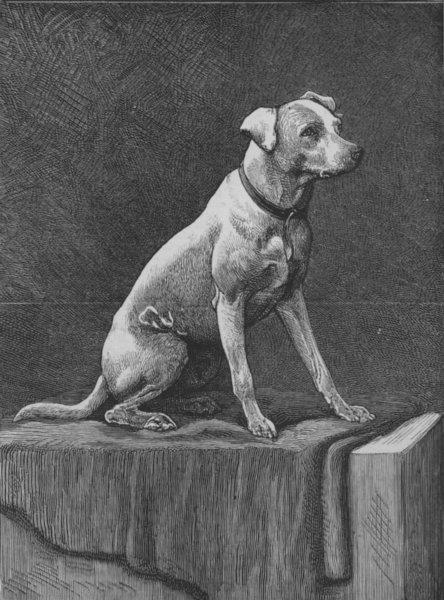 "Associate Product DOGS:""Regimental Jack,"" an Afghan campaigner, antique print, 1882"