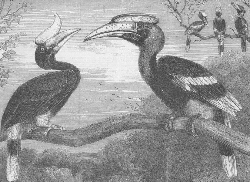 Associate Product LONDON. Hornbills, Gdns of, Regent's Park, antique print, 1864