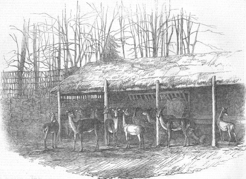 Associate Product SURREY. Deer Paddock, Durdans, nr Epsom, antique print, 1854