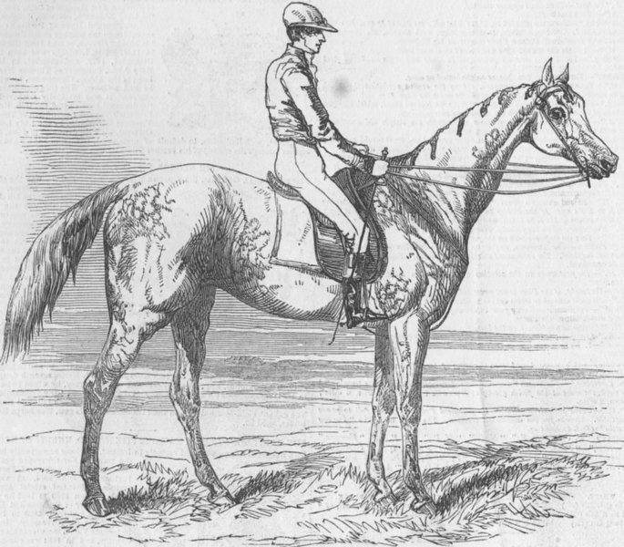 Associate Product LANCS. Fanny Grey winner of Manchester Steeplechase, antique print, 1849