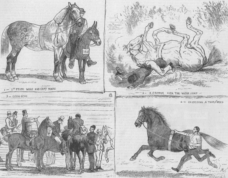 Associate Product LONDON. Horse Show, Alexandra Park, antique print, 1873