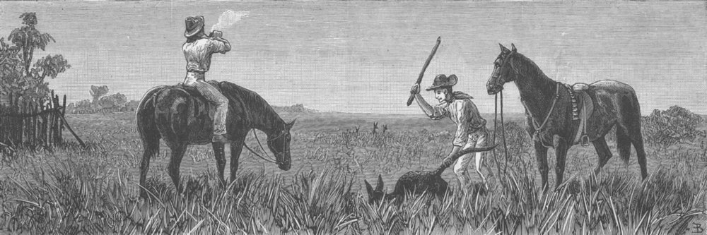 Associate Product AUSTRALIA. Wallaby Hunting, Queensland, antique print, 1882