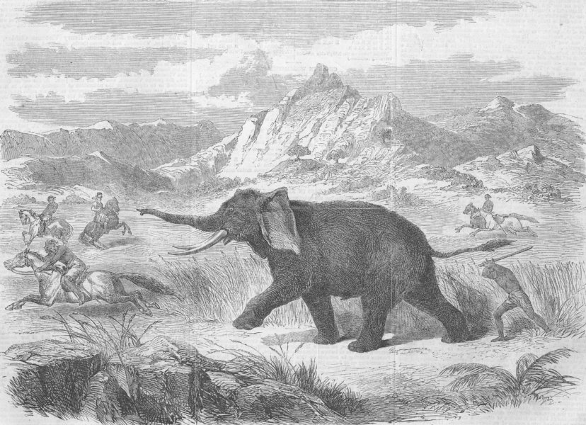 Associate Product ELEPHANTS. Arabs of Abyssinia hunting Elephant, antique print, 1866