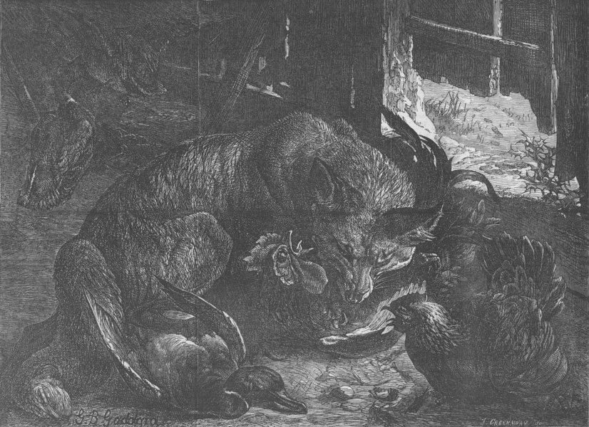 Associate Product FOXES. Foraging for Christmas dinner, antique print, 1867