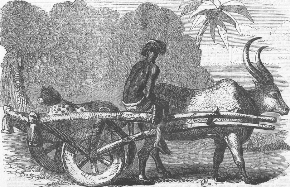 Associate Product INDIA. Hunting Leopard, Bengal, antique print, 1858