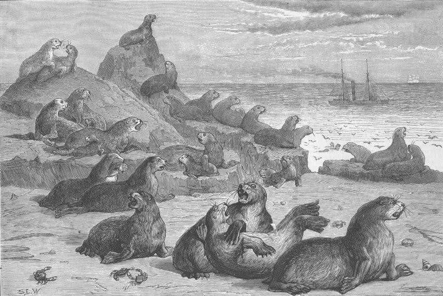 Associate Product CALIFORNIA. Seal Rocks, near San Francisco , antique print, 1876