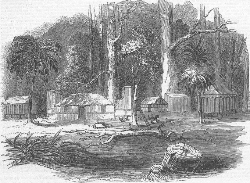 Associate Product NEW ZEALAND. Emigrant's Cottage. Emigrants', Otago , antique print, 1851