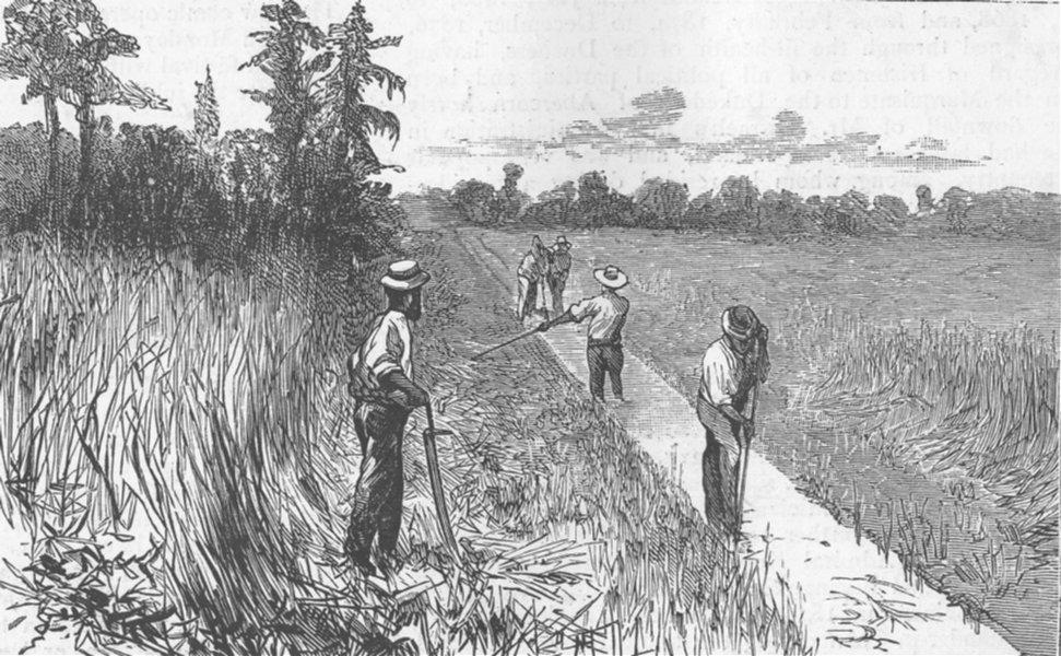 Associate Product FLORIDA. Draining swamp, Runnymede, antique print, 1885