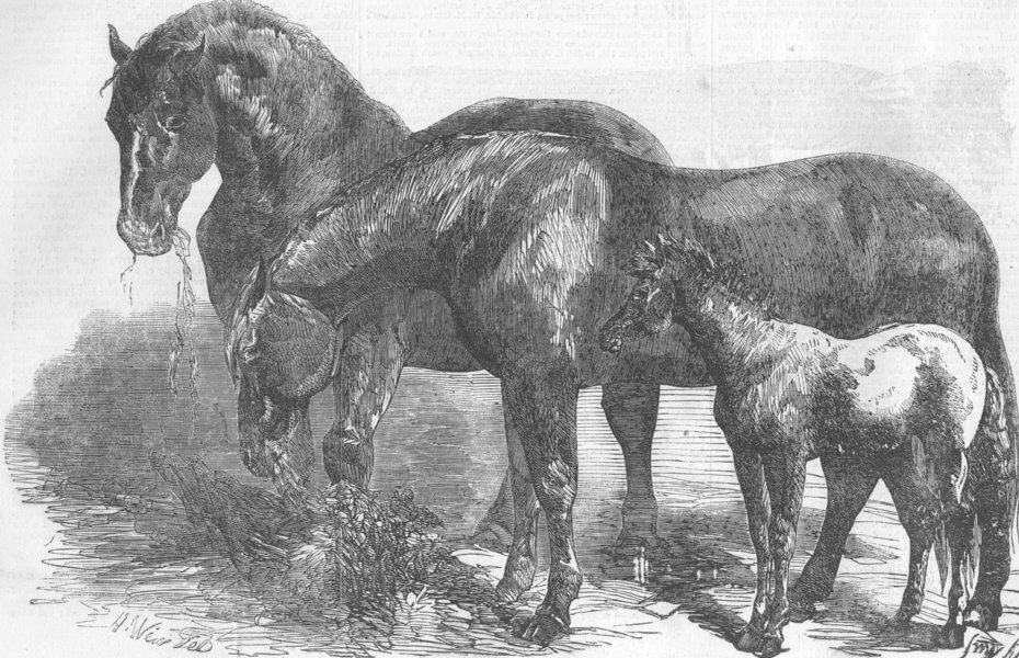 Associate Product CHELMSFORD. Royal Agricultural Soc's Show. horses, antique print, 1856
