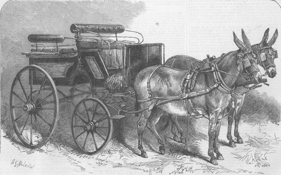 Associate Product ANIMALS. A pair of donkeys in Harness, antique print, 1865